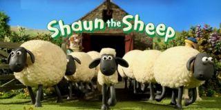 shaun-o-carneiro