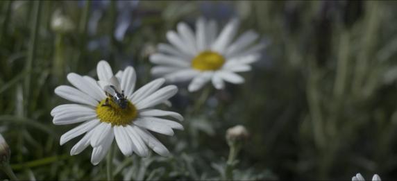 blackmirror-bee